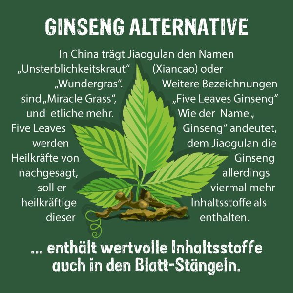 Jiaogulan als Alternative zu Ginseng