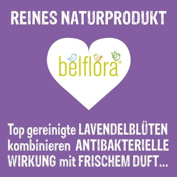 Lavendel antibakterielle Wirkung mit frischem Duft
