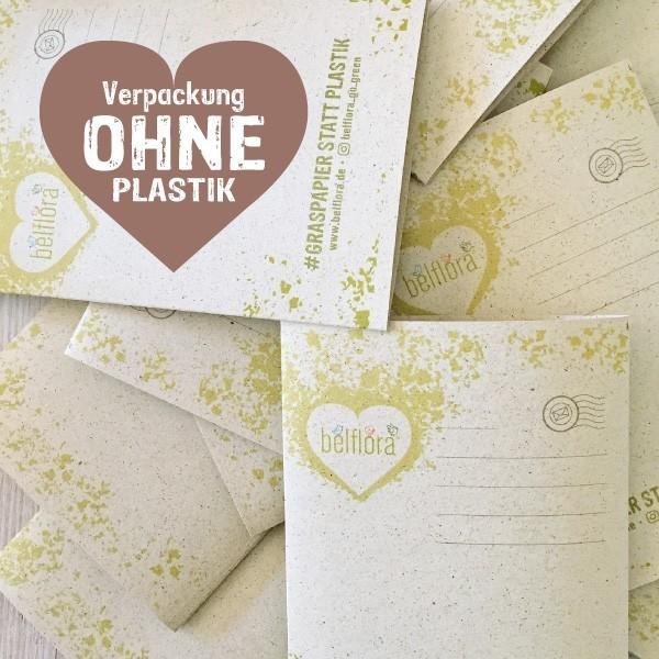 Kastanien Waschmittel Rosskastanie mit Verpackungen aus Graspapier